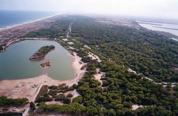 Mejores bosques de la Comunidad Valenciana - Dehesa del Saler (Valencia)