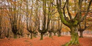Los mejores parques naturales del País Vasco
