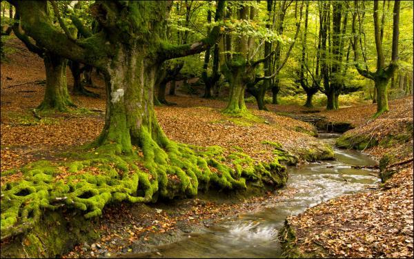 Los mejores parques naturales del País Vasco - Parque Natural del Gorbea