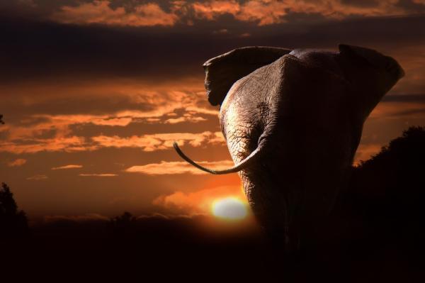 Dónde ver animales en África - Parques naturales espectaculares para ver animales