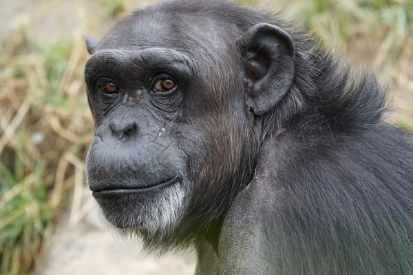 Dónde ver animales en Cataluña - Fundació MONA, el centro de rescate de primates de Cataluña
