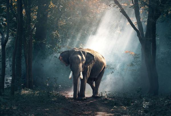 Dónde ver animales en Vietnam