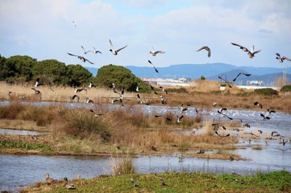 Los mejores parques naturales cerca de Barcelona - El Delta del Llobregat