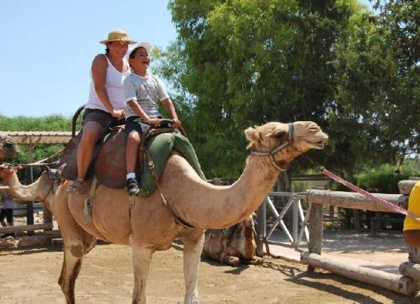 Dónde montar en camello en Tenerife - Camel Park, un parque ideal para pasear en camello en Tenerife