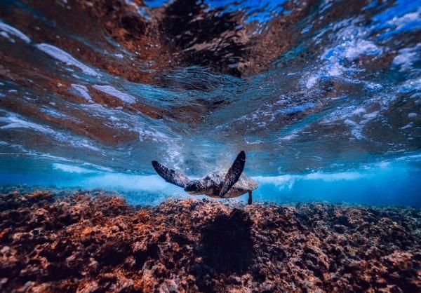 Dónde hacer submarinismo en Indonesia