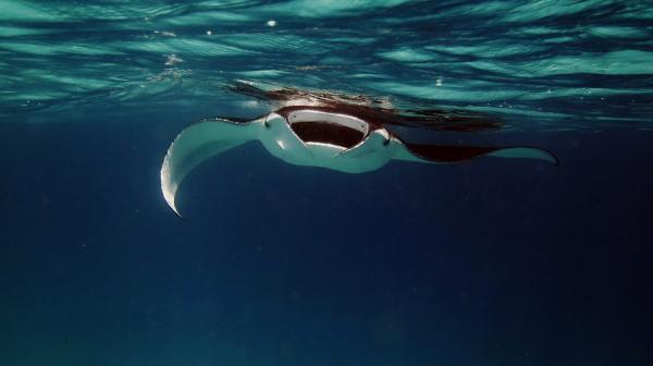 Dónde hacer submarinismo en Indonesia - Raja Ampat, el sitio con mayor biodiversidad del mundo