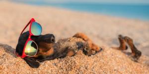 Playas para ir con perros en Asturias