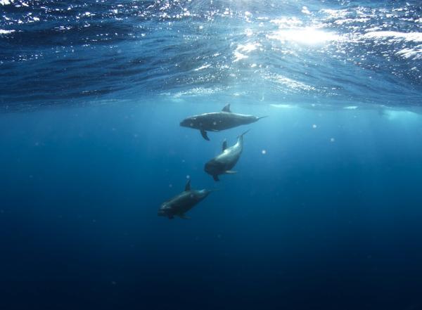 Lugares para nadar con delfines en Colombia