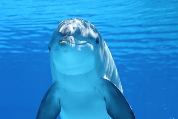 Lugares para nadar con delfines en Colombia - Oceanario, Islas del Rosario