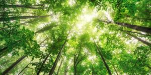 Los mejores bosques en Madrid