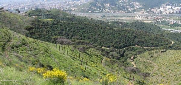 Bosques en Barcelona y alrededores - Parque de la Serralada de Marina