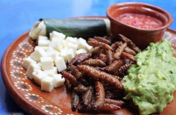 Dónde comer insectos en México - Corazón de Maguey, un restaurante para comer insectos en México