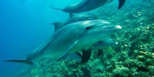 Dónde nadar con delfines en España