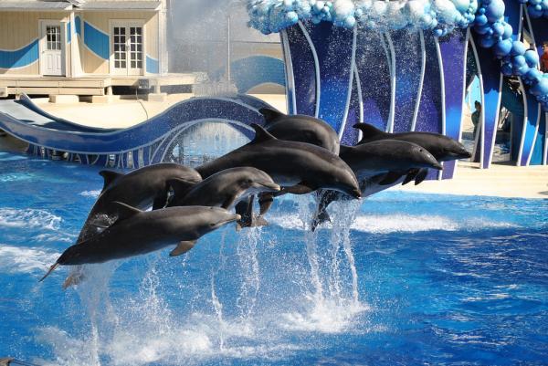 Los mejores parques de Orlando, Florida - SeaWorld Orlando, imprescindible parque de atracciones