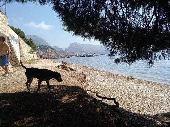 Playas para perros en Alicante - Mar y Montaña (Altea)