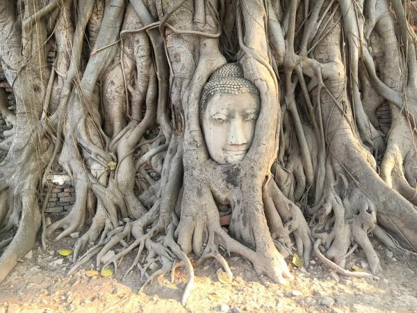Los 5 mejores templos budistas de Tailandia - Wat Mahathat, otro templo imprescindible en Tailandia