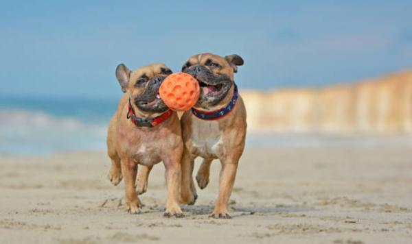 Playas para ir con perros en Valencia - Playa de Pinedo (Valencia)