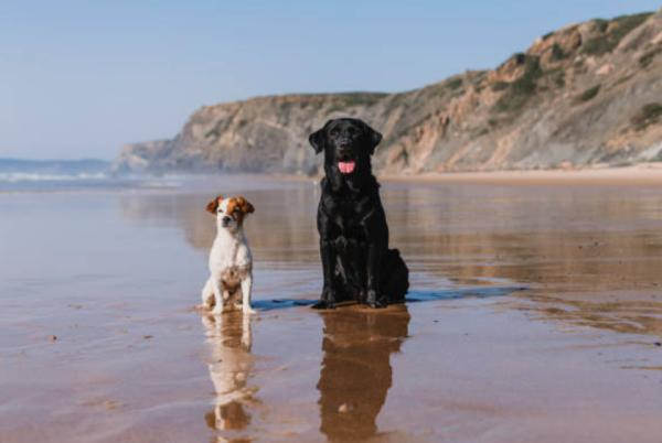 Playas para ir con perros en Valencia